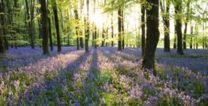 humanist-funeral-spring-woodland-burial-ground