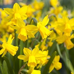 spring-woodland-burial